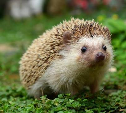 Uhhh I have an interest in collecting hedgehog things? I like to collect anything I can find that is hedgehog related. Clothing, phone cases, ornaments, plushies, cards etc. It's not super duper unusual 或者 anything :v But I haven't come across another person with a hedgehog collection yet lmao.