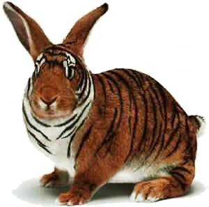 Unfortunately, I no longer have the very first icon I used for Fanpop, but I do remember it being a small icon of a Pikachu. But I do I have the segundo icon I used, after deleting the first one. It's a cute picture of a hybrid between a tiger and a rabbit.