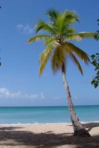 Palm درخت