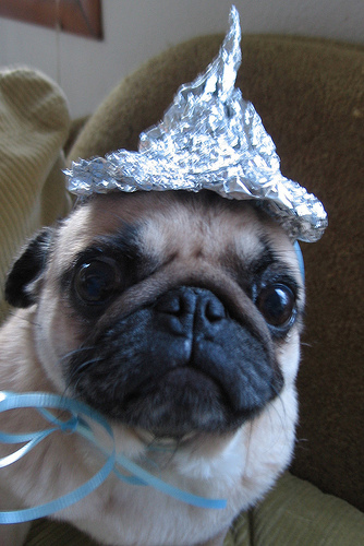 It's all a hoax. Aliens are mind controlling the scientists and the government and Berühmtheiten are all a part of the Illuminati. Nobody is safe. Your sister is a part of the Illuminati. Your mother. Your cat. Your fish. <i>Even you're in the Illuminati.</i>
