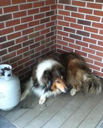 My dog, চিনাবাদাম Butter!