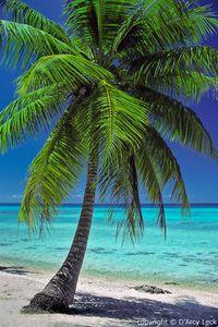 Read mah palm