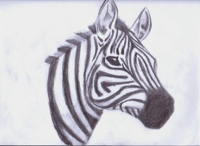 This is the first picture came up and it's a picture of a zebra, I drew a couple years ago.