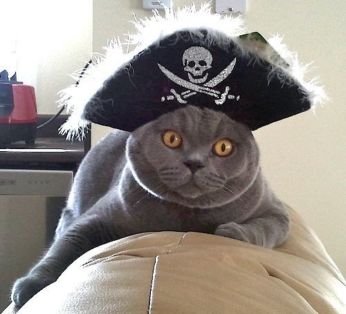 a cat wearing a pirate hat
