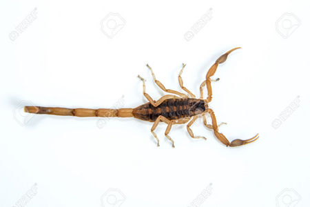 That must have been a Scorpion. I always liked them. One of my Favorit Arthropods !!!!