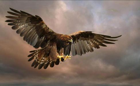 A Golden Eagle oder a Tiger. I mean, Du sagte any Animal XD !!!!