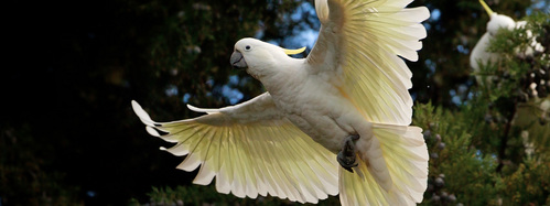 Have a cockatoo. They might not be my favorite. Im not sure. But they sure are one of my vipendwa