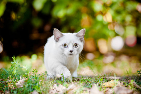 im not a Фан of Кошки (no offence).. i like Собаки better....... but if i have one, it will be a munchkin breed cats...they will remain small their whole life time which is the aspect i like even in dogs.... или maybe like lefteris told, like neko from k project, instead of a girl version, id like a boy version :3