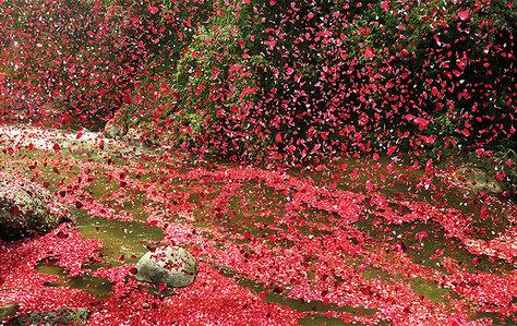 A light rain of glitter au petals.