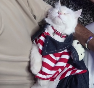 This outfit,I'm sad and happy right now because this beautiful cat will leave for a new ہوم tomorrow یا the دن after. If anyone is confused I don't only adopt cats but I also find them homes.