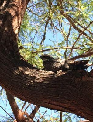 This little baby hawk I found hanging around my college.X3