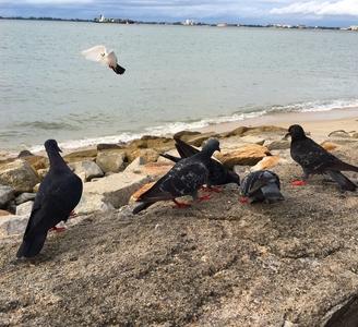 •Pigeons on the beach.