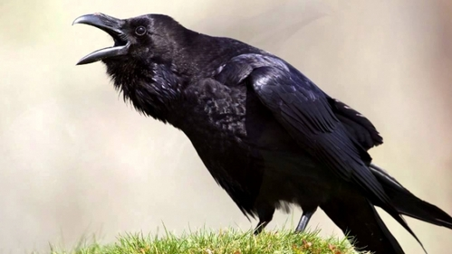 """Technically African Greys and Cockatoos are """"exotic"""" pets and I DO plan to have at least one of the two, so my default would be those. If not those then.... Raven, Owl, or Peregrine palkon XD Perhaps a Golden Eagle"""