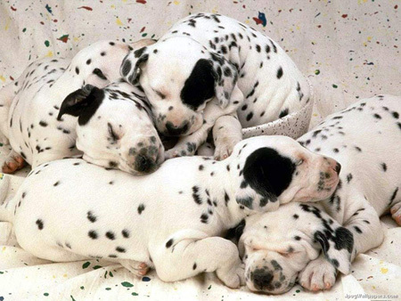 what do Du want to be when Du grow up?????..... i want to be a vet....i Liebe Tiere <3<3<3