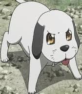 POST A CUTE DOG!!!! :3