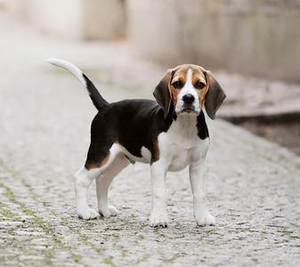 Could আপনি resist a হারিয়ে গেছে puppy?