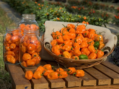Have any of bạn ever ate a hot chili pepper before? If so, what was the hottest one bạn have ever eaten?