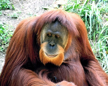 What is/are your paborito primate(s)?