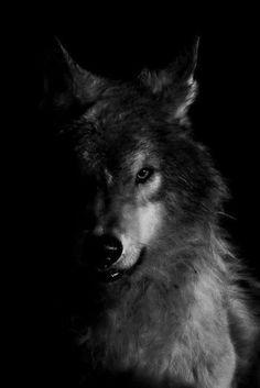 Wolf/human role-play anyone?