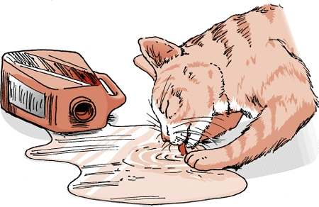 Why do 고양이 like antifreeze?