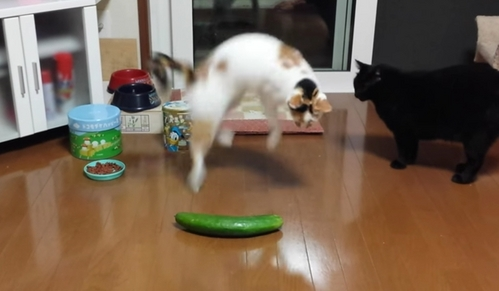 Why do Katzen are afraid of cucumber?
