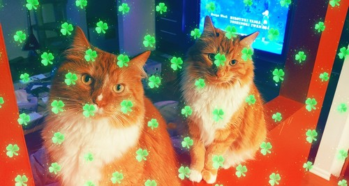 Happy Saint Patrick's ngày from me and my lông, lông thú babies! What are bạn doing today?