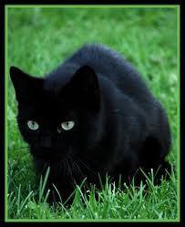 Allan in cat form