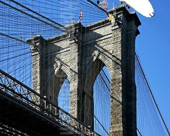 Fight on brooklyn bridge.