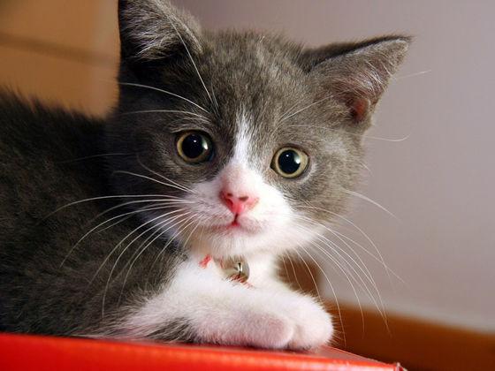 Michael's New Kitten, Mittens