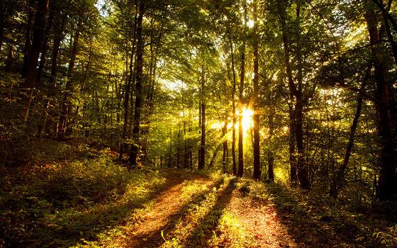 Celestial Forest