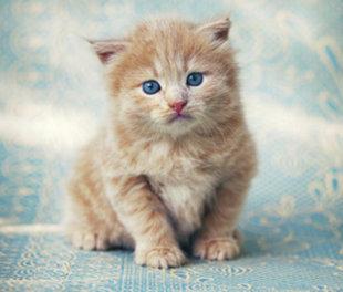 A Kitten Maris Gave Michael