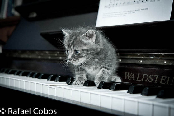 Michael's Cat Playing On His Pianoforte
