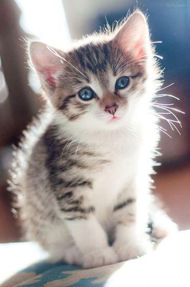 Fluffy, Maris New Kitten Michael Gave Her As A Present