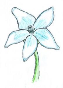 The Blue Ancora