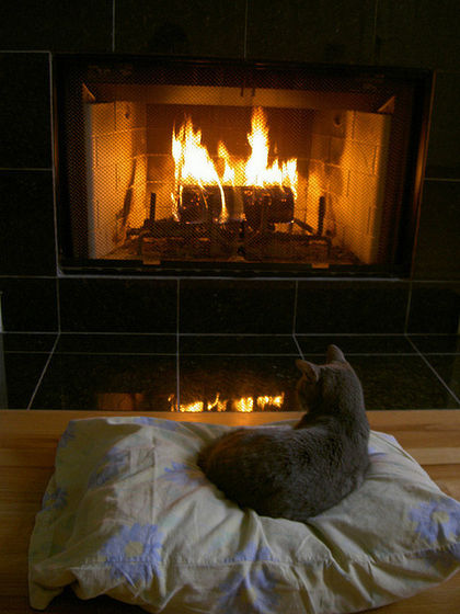 Michael's Cat Sitting With Him And Maris দ্বারা The Fireplace