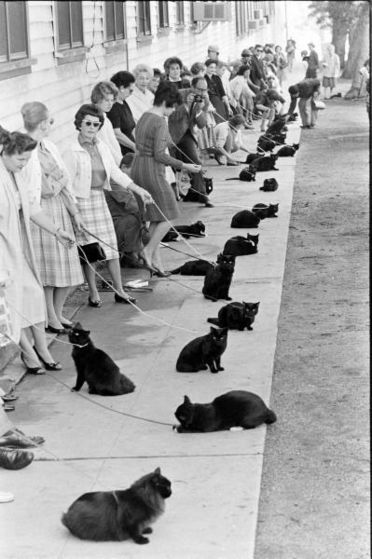 Michael Auditioning Several Black Cats For The Photoshoot