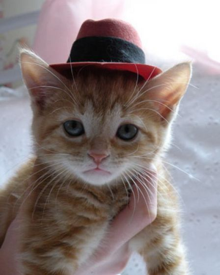 The Family Cat Wearing A Fedora Michael Bought For Her