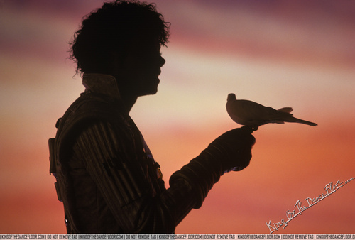 oh, sing sweet nightingale (I know thats a dove he's holding but still)