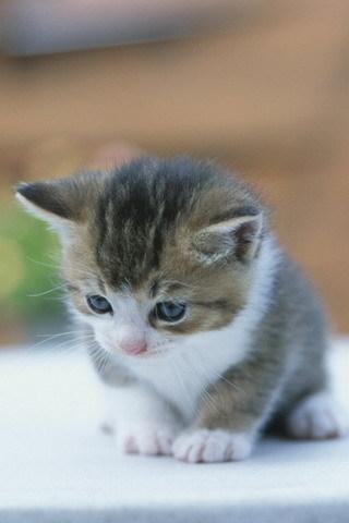 Michael's New Kitten