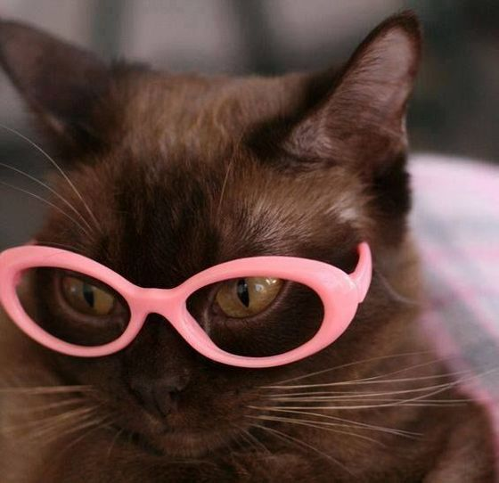 The Family Cat, Fashionista