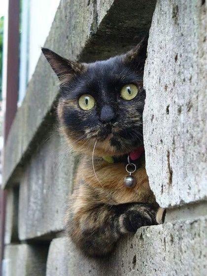 Maris' Cat, Bella