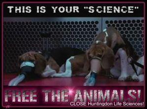 against animal experimentation