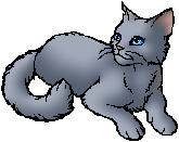 bluestar is my পছন্দ cat