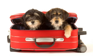 Traveling With Your Pets Guide