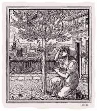 সিন্ড্রেলা wishing under the বৃক্ষ