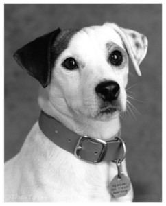 Wishbone: a little dog with a big imagination