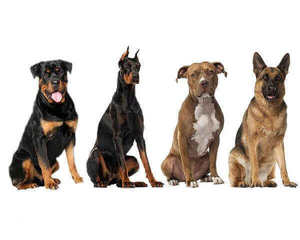 dog breeds banned in germany