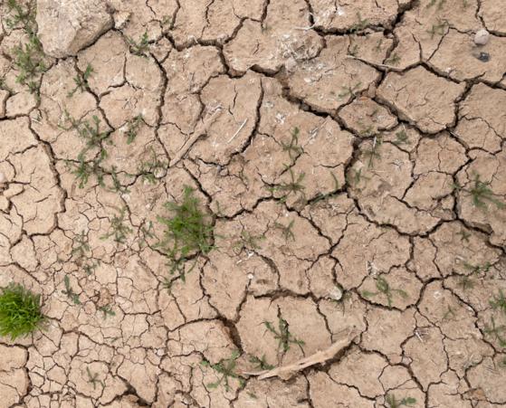Dry earth...