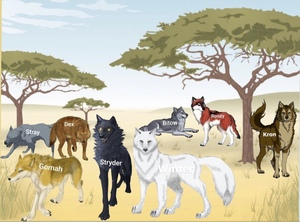 The serigala, wolf Pack
