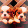 The Cute Puppies